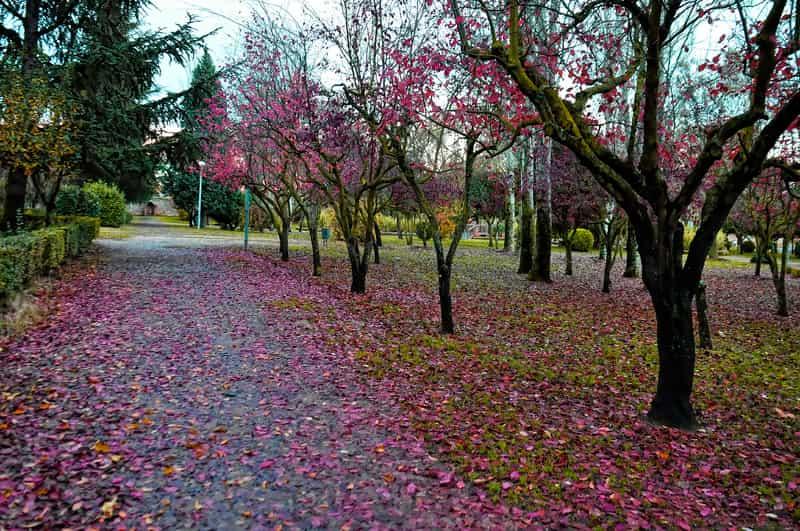 Parque de los Jesuitas de Salamanca